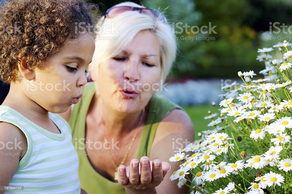 Grandmother and Dranddaughter Blowing a Flower Away ( serie) royalty-free stock photo