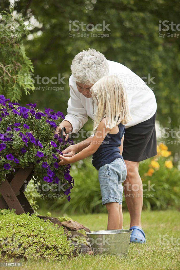 Grandmother and Granddaughter Deadheading Petunia Flowers royalty-free stock photo