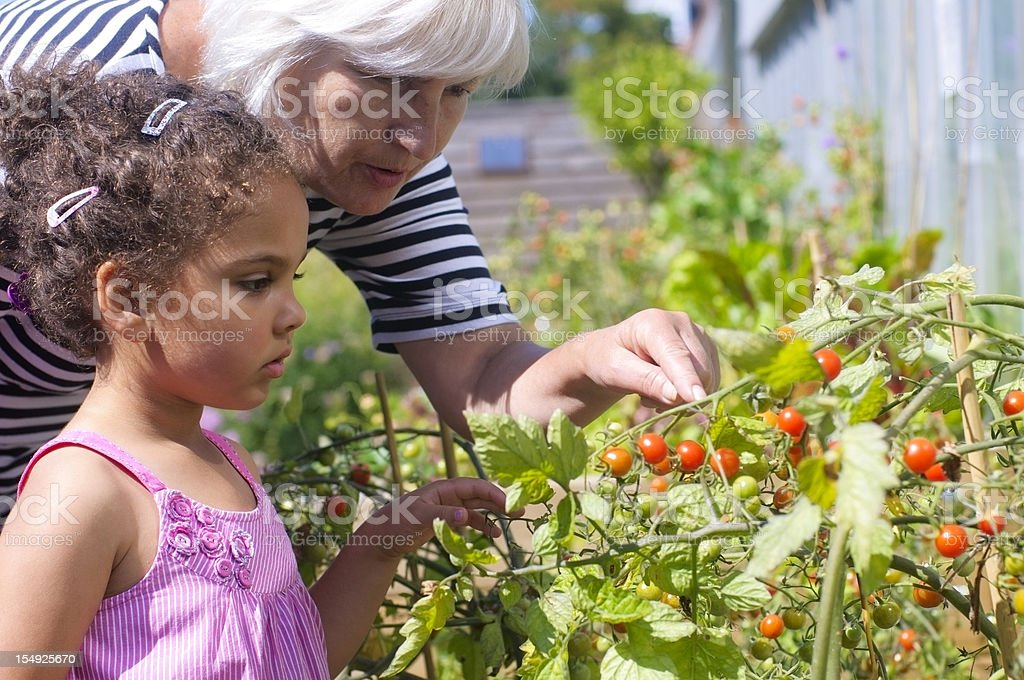 Grandmother and Granddaughter Gardening royalty-free stock photo