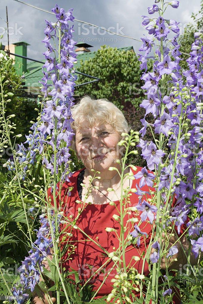 Grandmother with delphinium bush royalty-free stock photo