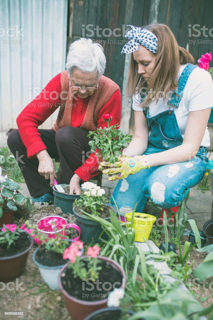 Grandmother with her granddaughter working in the garden stock photo