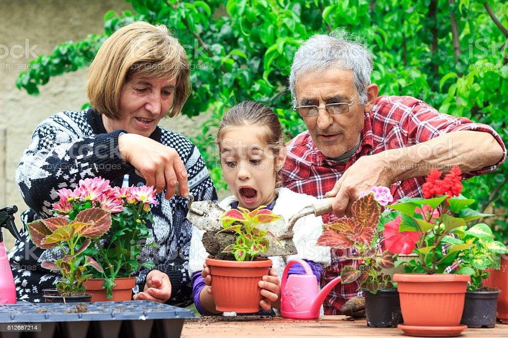 Grandparents and granddauther in the garden enjoying new flowers stock photo