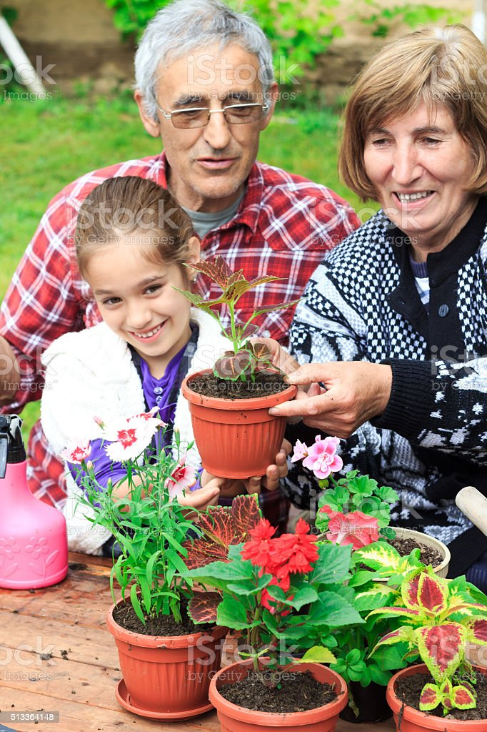 Grandparents and granddauther in the garden with new flowers stock photo