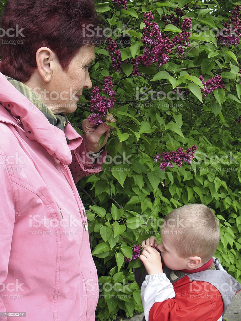 grandson and grandmother before lilac bush royalty-free stock photo