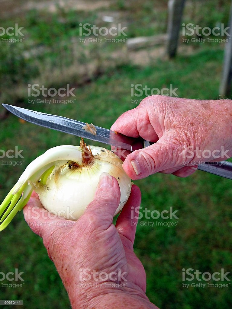 Granny Hands, Peeling Onion royalty-free stock photo