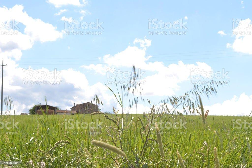 grano e cereali in natura stock photo