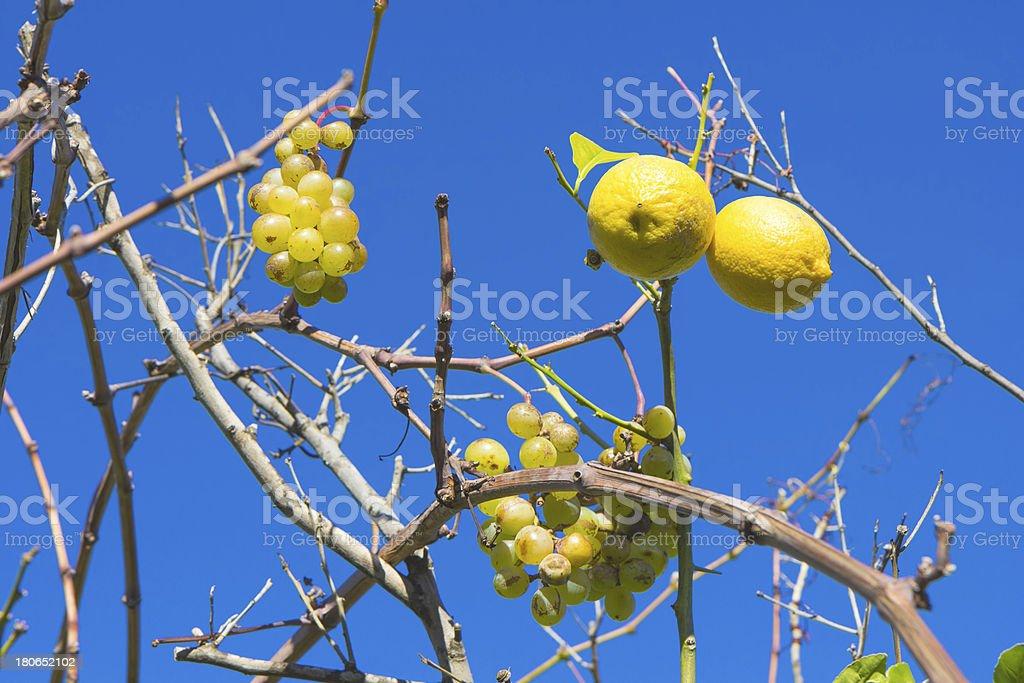 Uva e limoni foto stock royalty-free