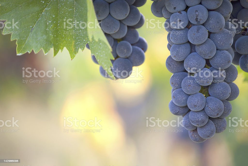 Grape close up with copy space stock photo