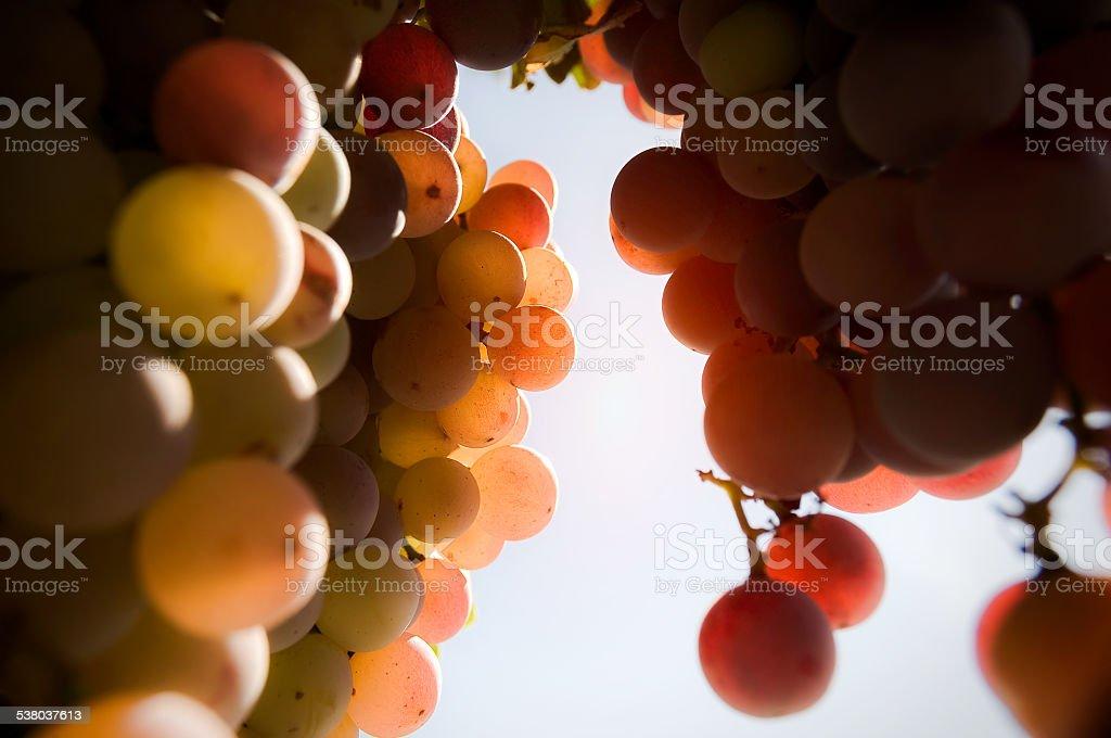 Grape Defocus stock photo