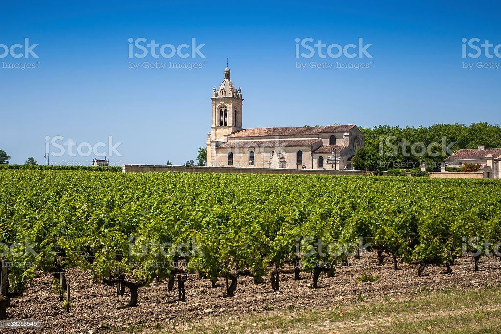 Grape field and old church behind. Bordeaux region in France stock photo