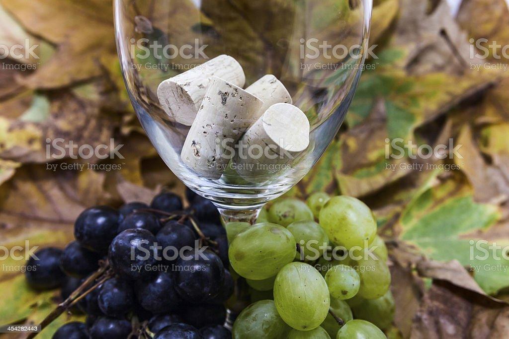 grape for vine royalty-free stock photo