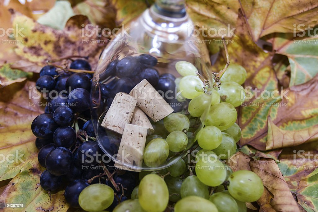 grape for vine royalty-free stock photo