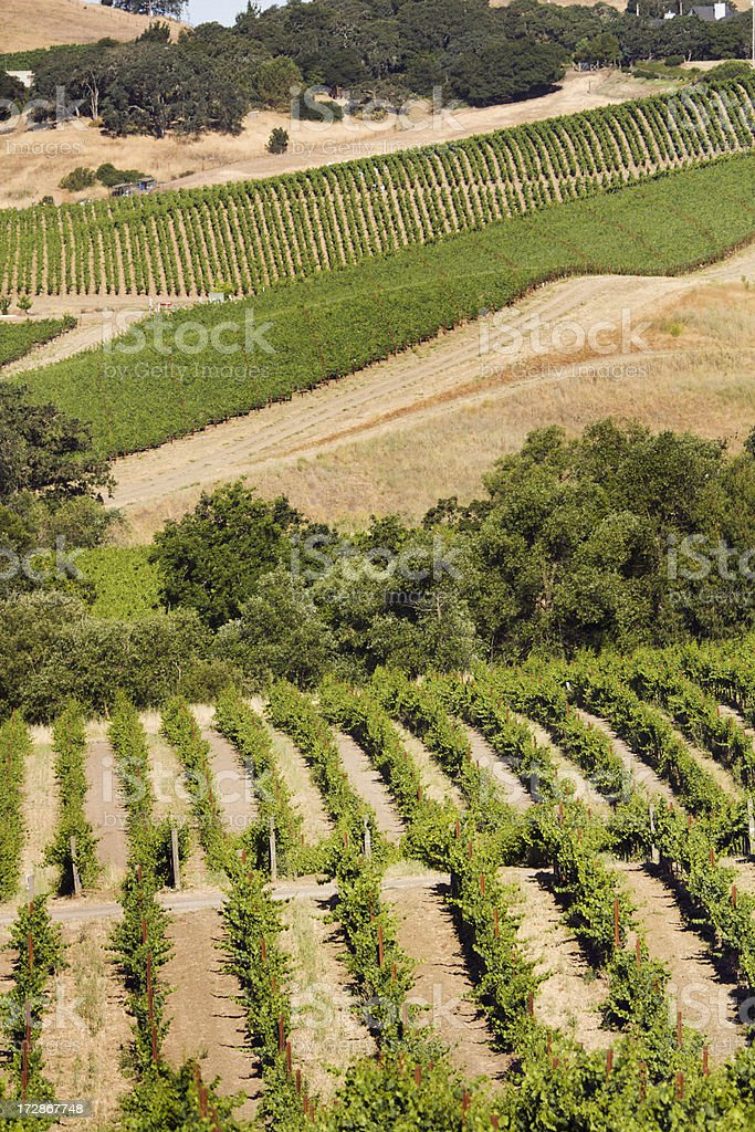 Grape Growers at Carneros Valley royalty-free stock photo