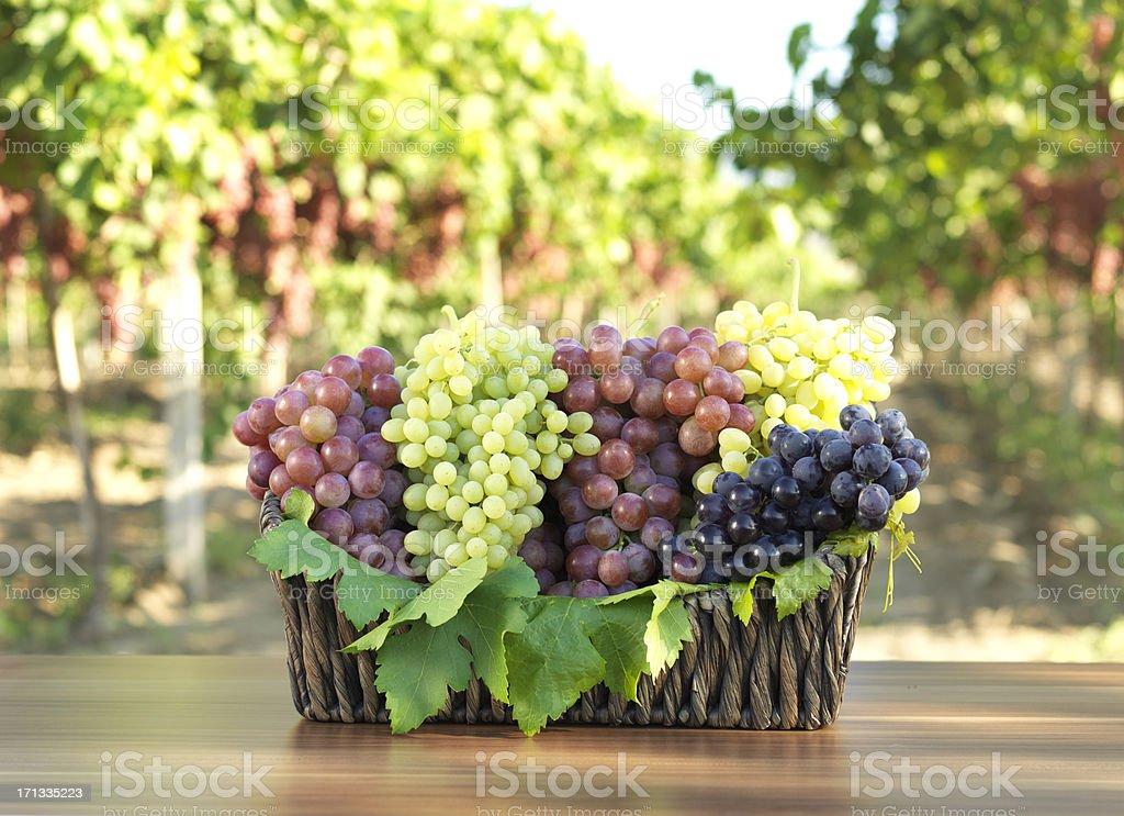 Grape in Vineyard stock photo