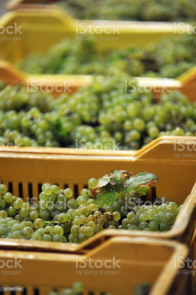 grape leaf in box stock photo