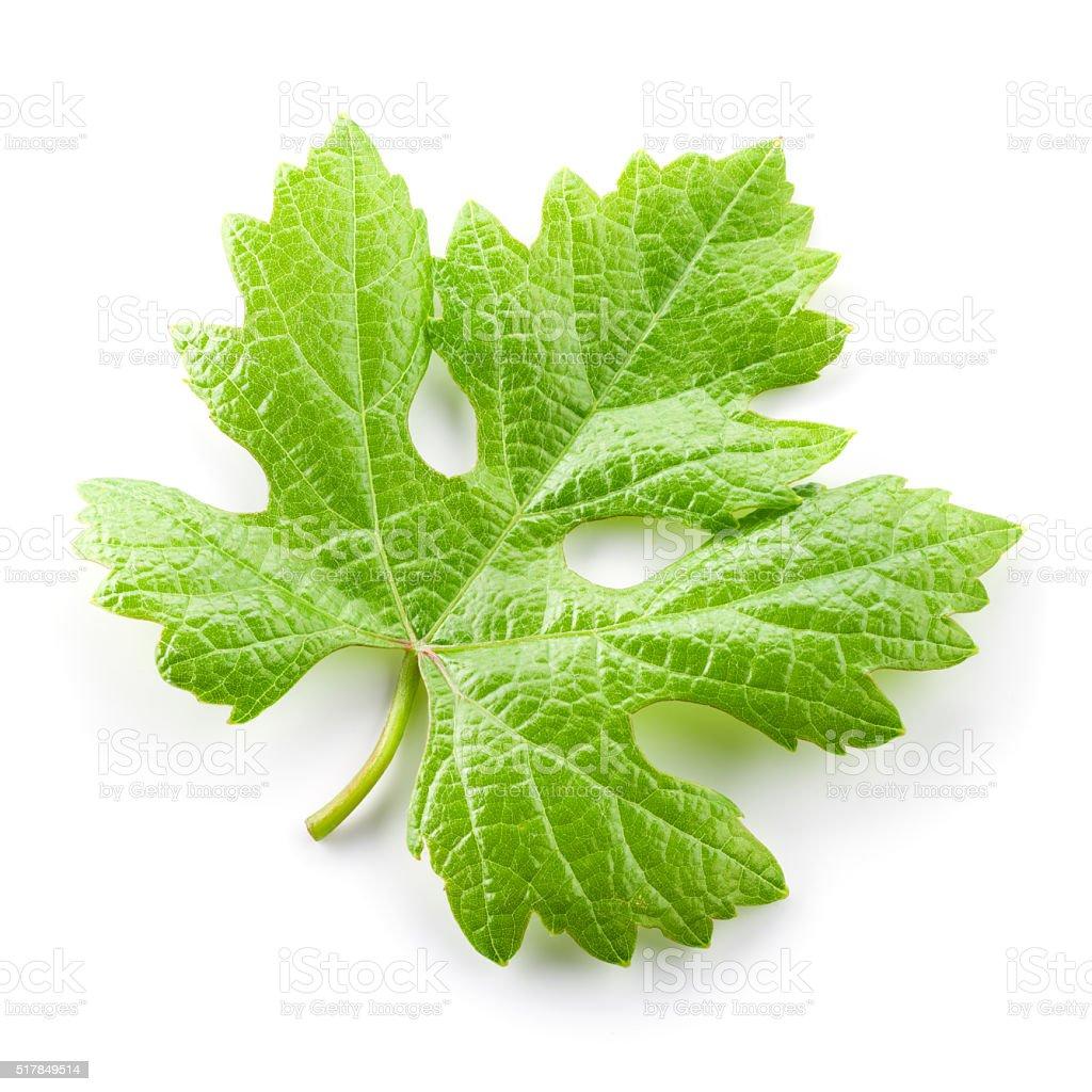 Grape leaf isolated on white. stock photo