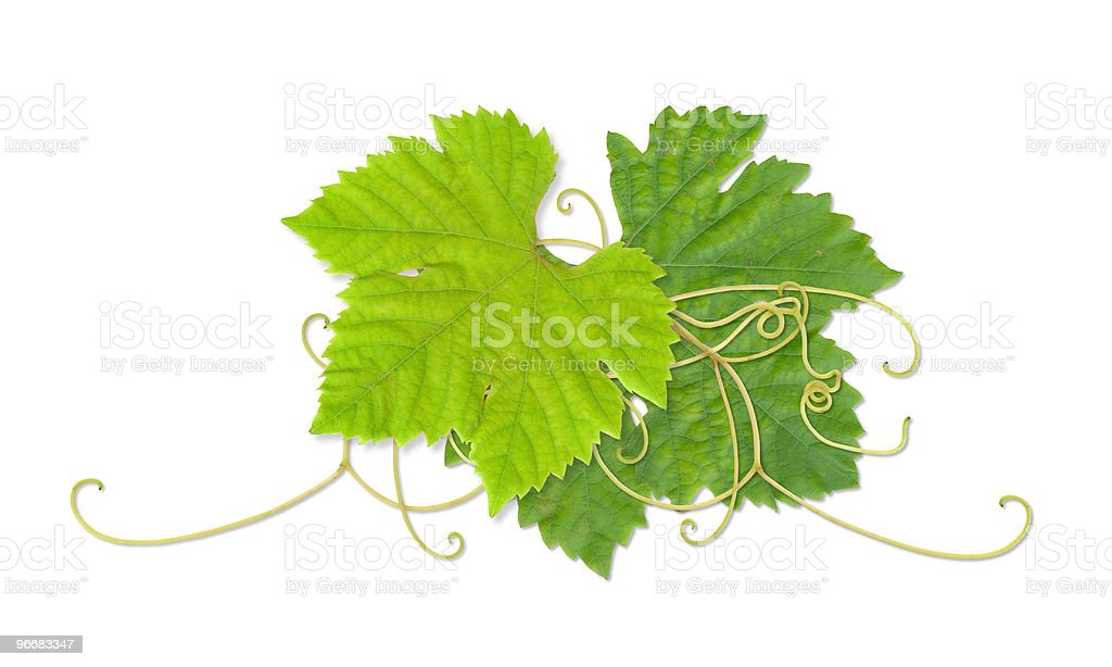 Grape leaves 03 royalty-free stock photo