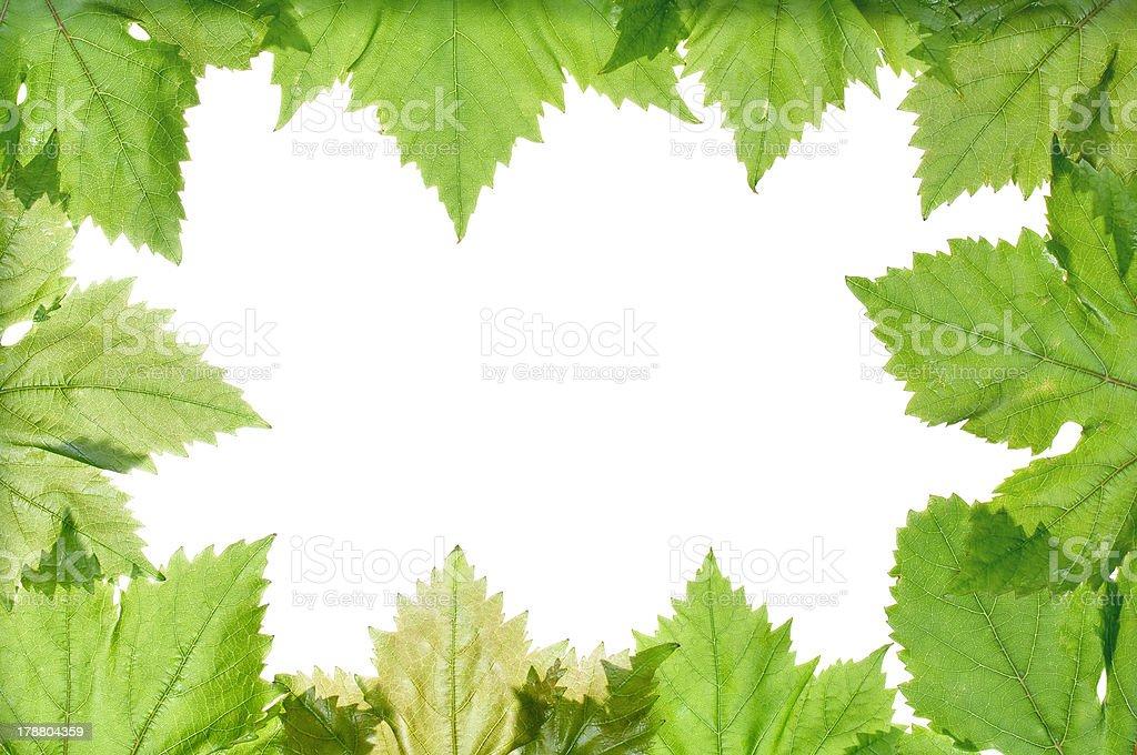 Grape leaves border royalty-free stock photo