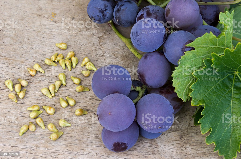Grape seed stock photo