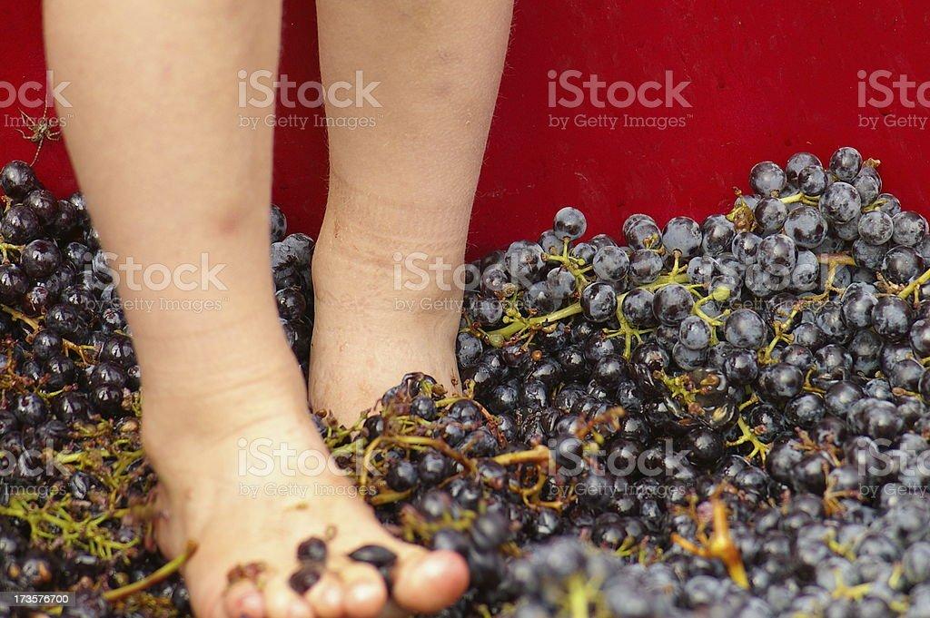 Grape Stomp stock photo