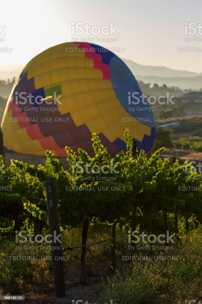 Grape vineyard with hot air balloon inflation stock photo