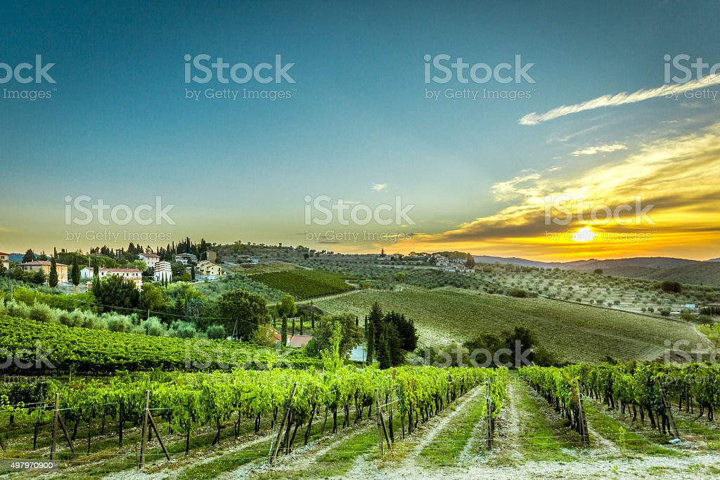 Grape & Viticulture in Toscany Italy stock photo