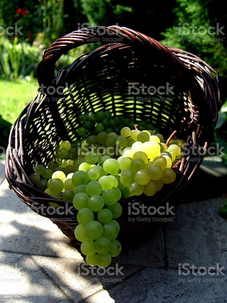 grapes 2 stock photo