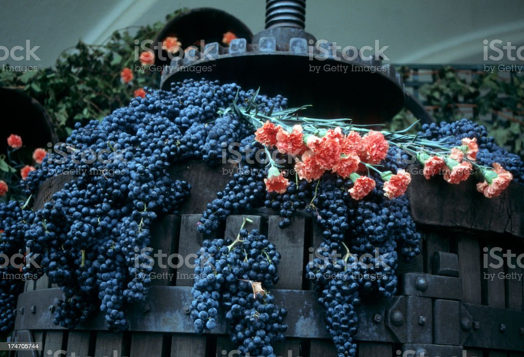Grapes and carnations in La Rioja royalty-free stock photo