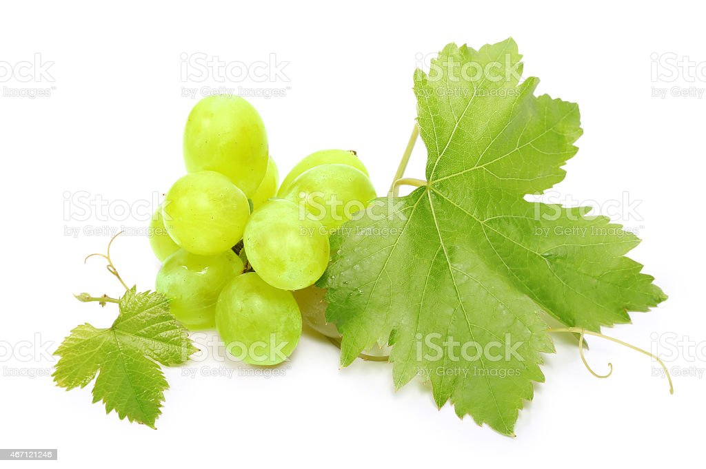 Grapes and leaves on a white background  stock photo