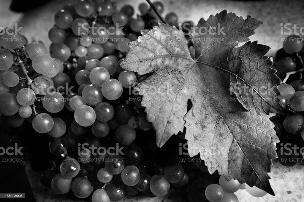 Grapes and vine leaf stock photo