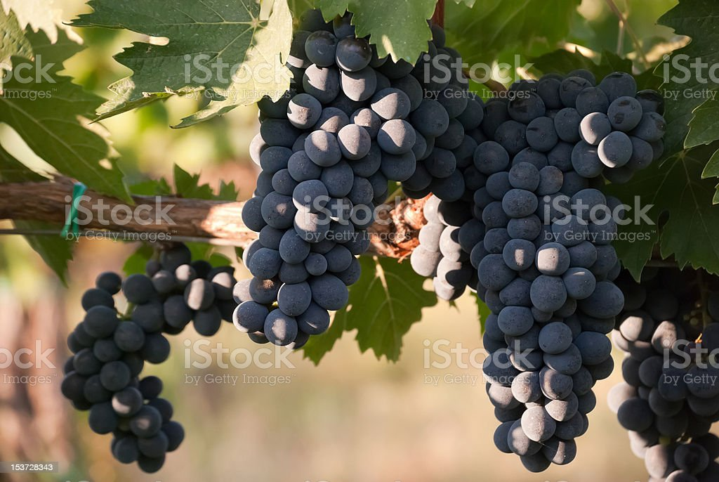 Grapes close up stock photo