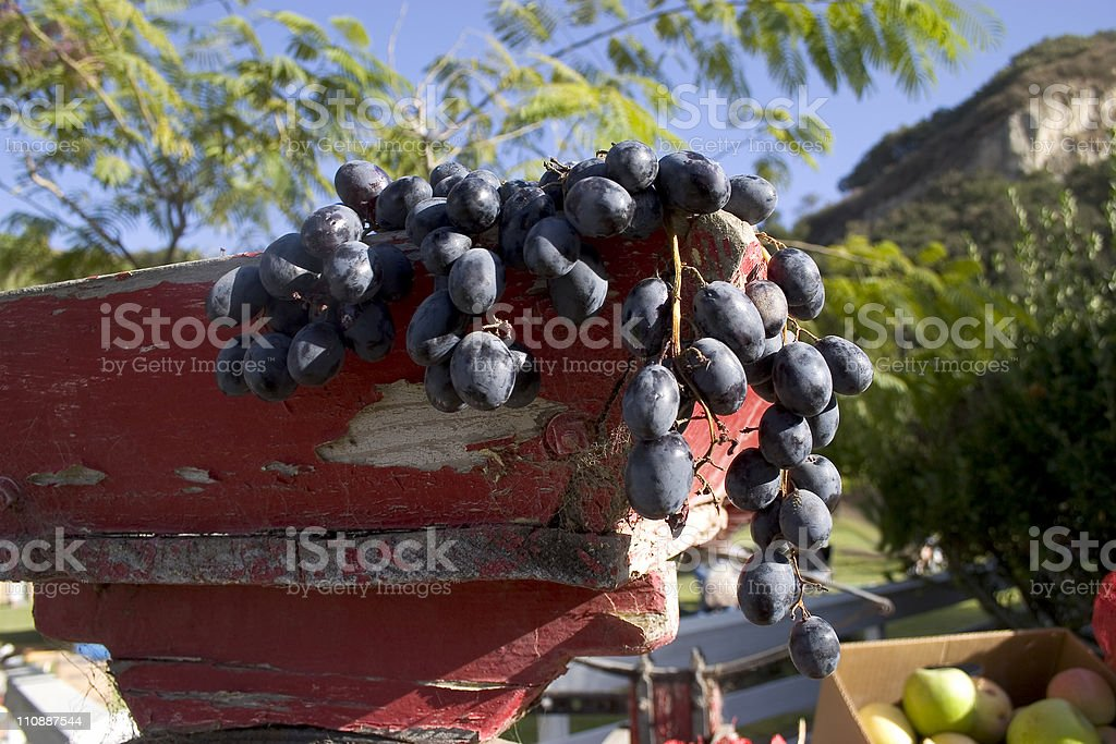 Grapes hanging off the bin royalty-free stock photo
