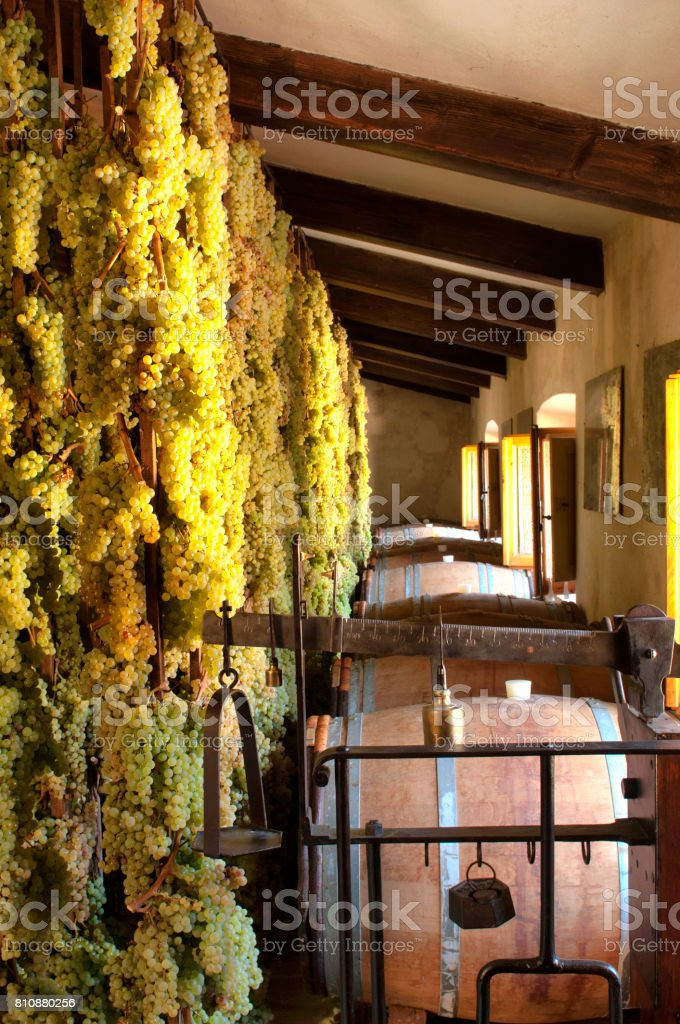 Grapes in a cellar stock photo