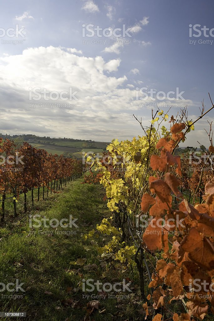 Grapes in Autumn royalty-free stock photo