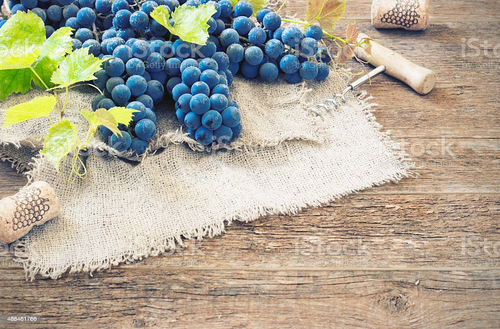 grapes in vintage setting with corks on wooden table stock photo