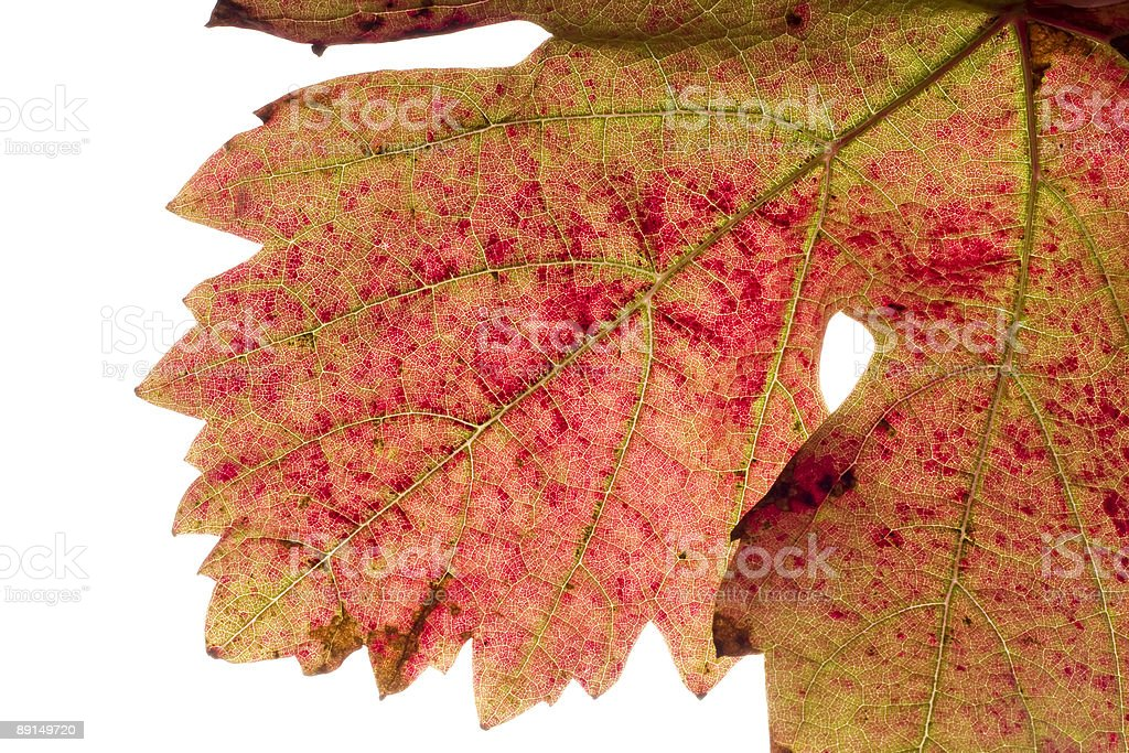 grape's leaf background royalty-free stock photo