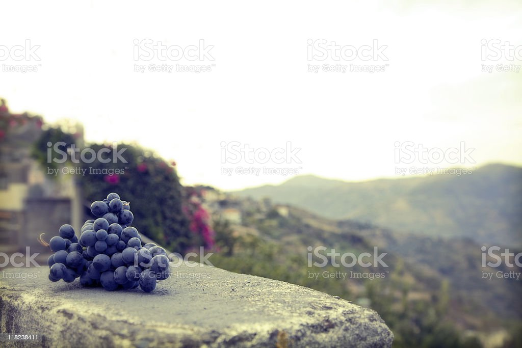 Grapes on an old wall in Sicily, Italy royalty-free stock photo