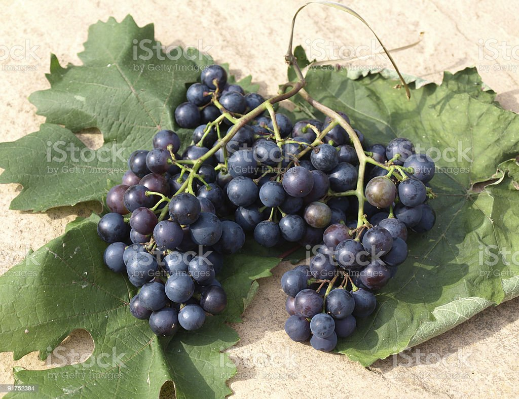 Grapes on vine leaves stock photo