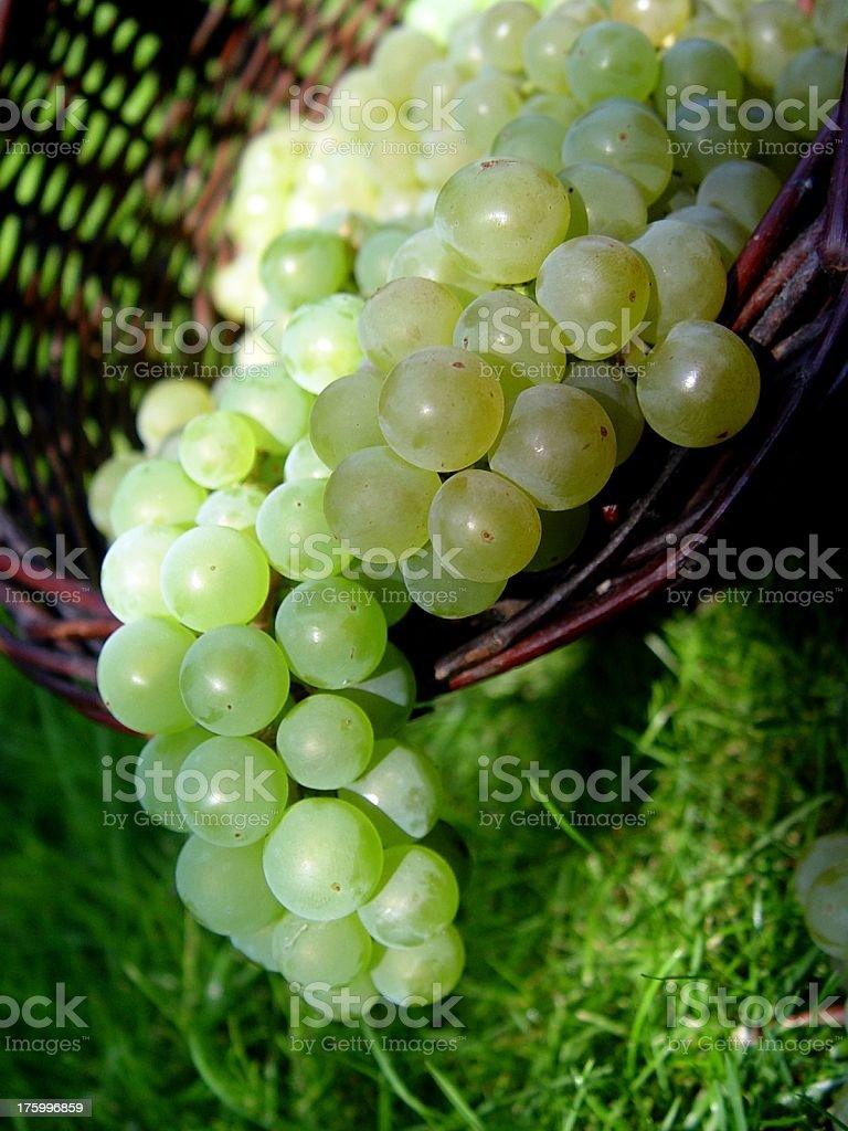Grapes stock photo