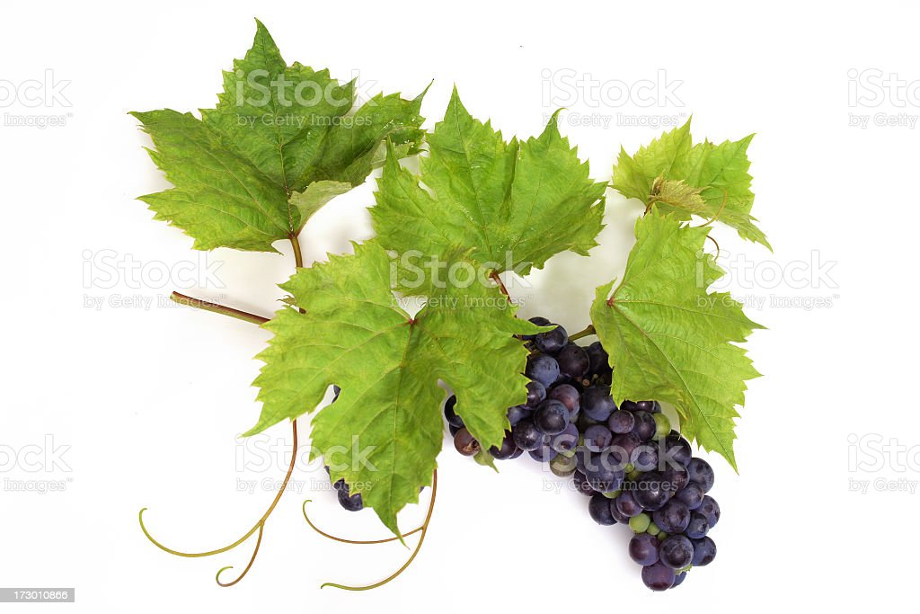 Grapes violet with Leafs stock photo
