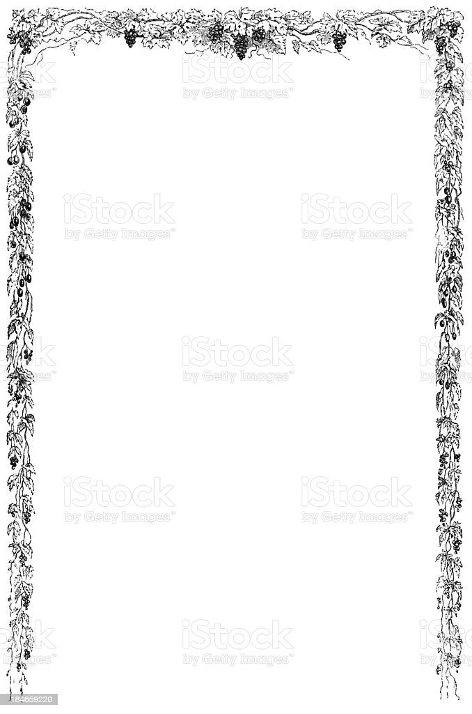 Grapevine Border - Antique Engraving stock photo