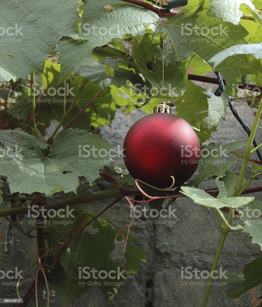 Grapevine christmas royalty-free stock photo