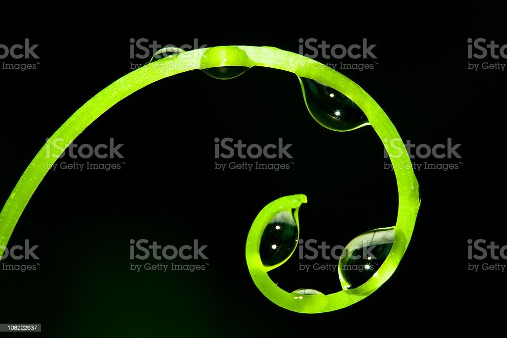 Grapevine tendril with water droplets royalty-free stock photo