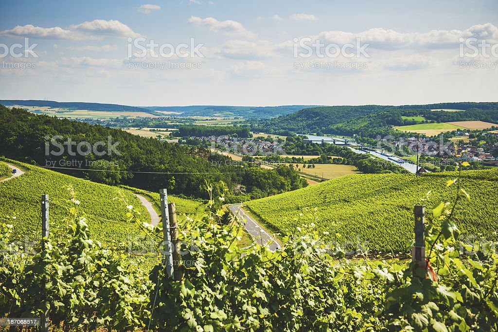 Grapevines in Germany royalty-free stock photo