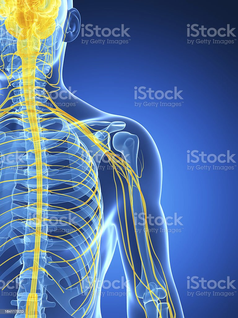 Graphic image of an X-ray shot shoulder nerves stock photo