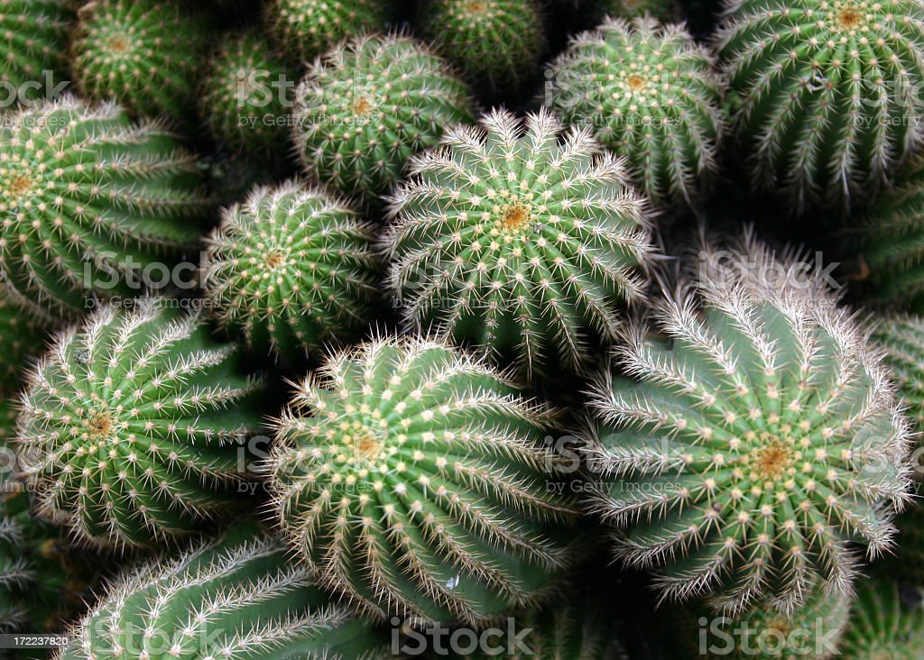 Graphic of Many cactuses close together royalty-free stock photo