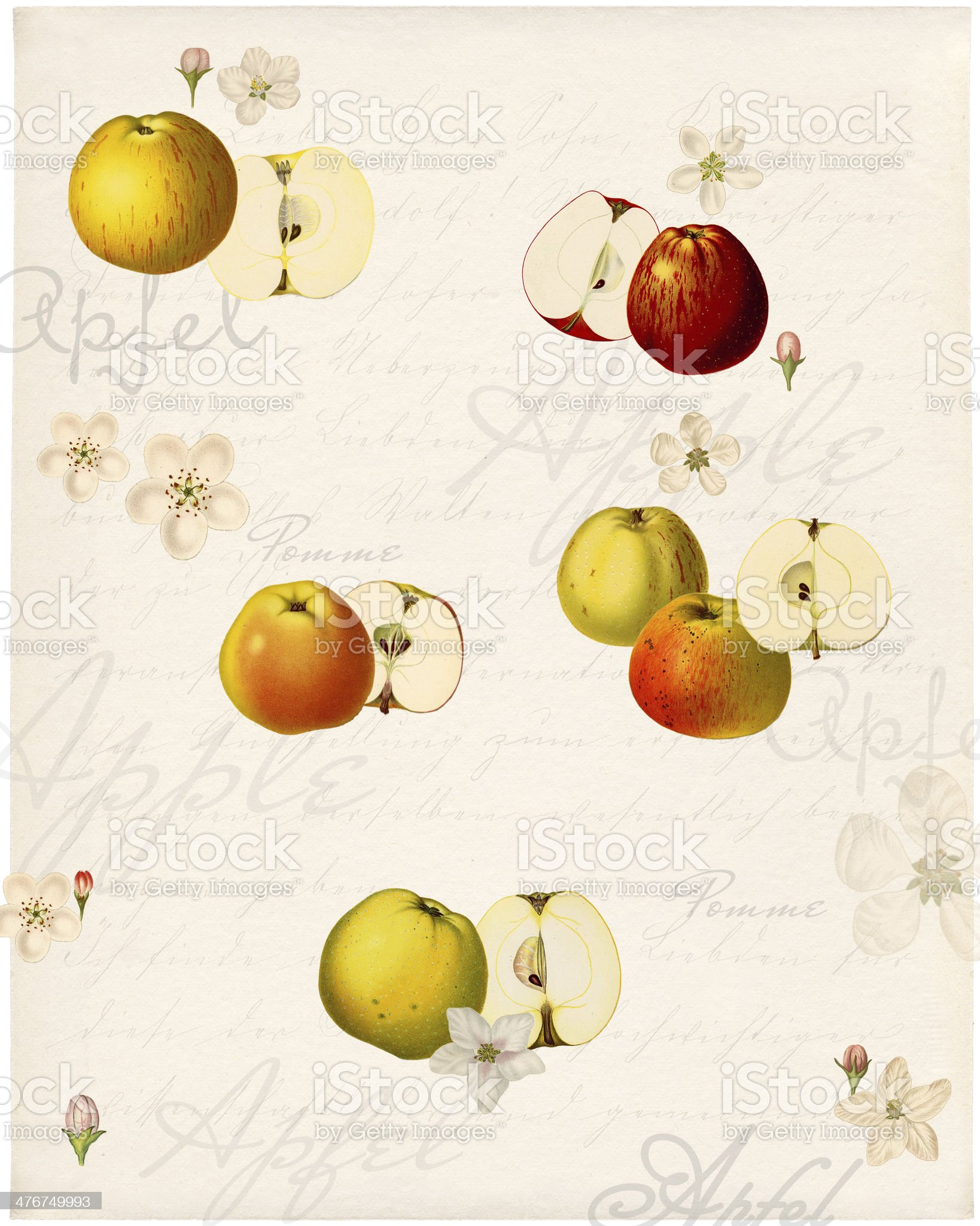 Graphics with old apple varieties royalty-free stock photo