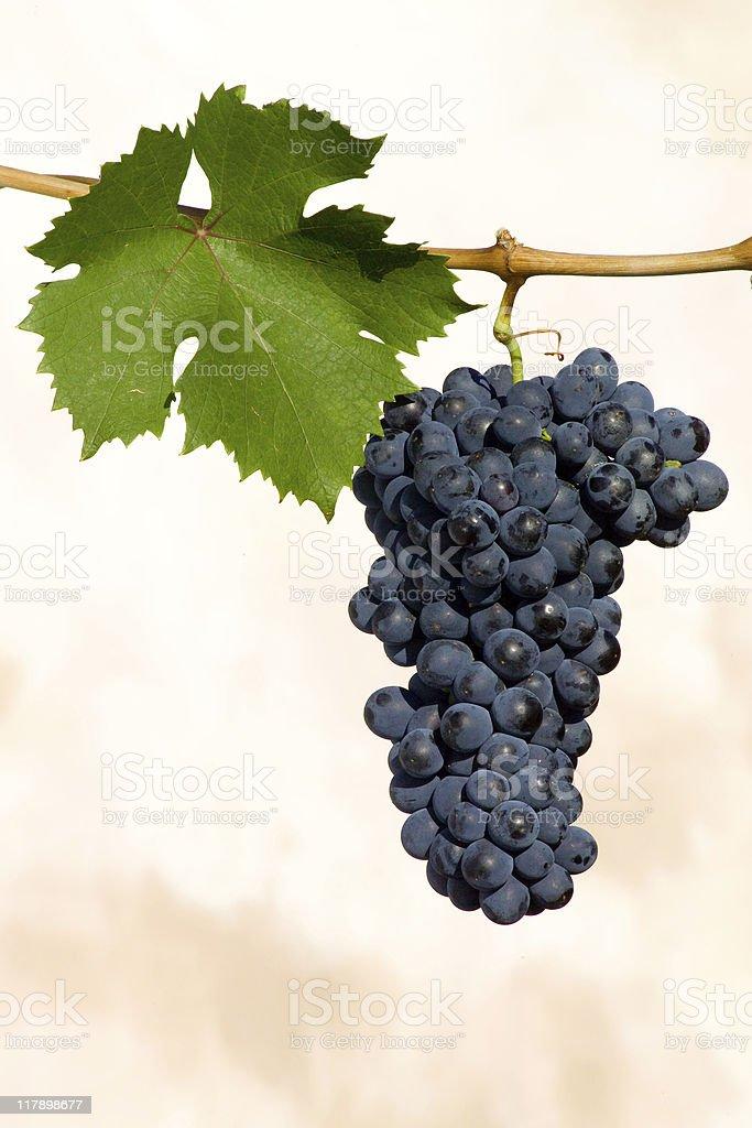 grappolo uva stock photo