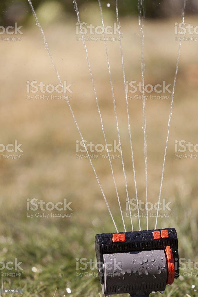 gras sprinkler stock photo