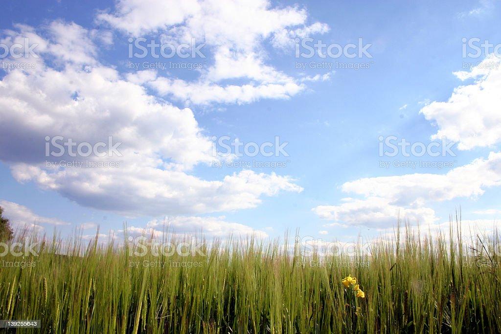 grasland and sky royalty-free stock photo